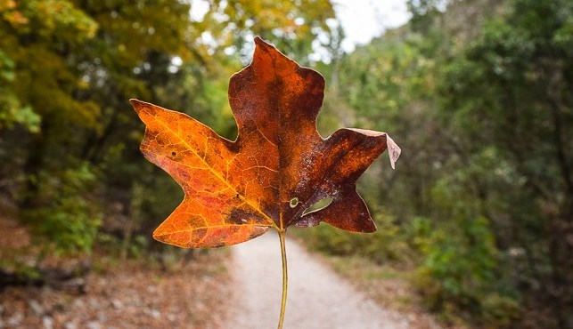 Lost-Maples-SNA-Smaller-92-of-107