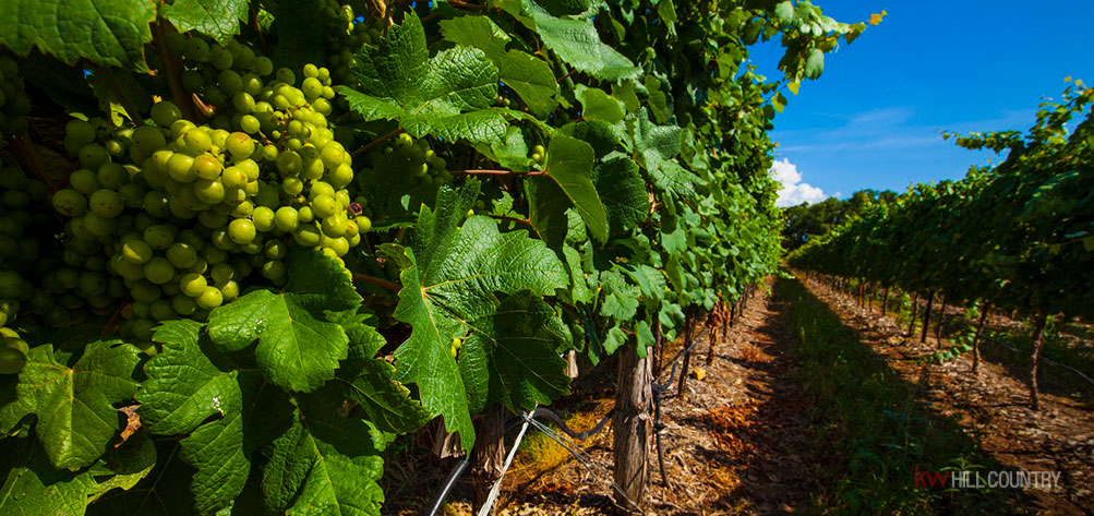where-the-locals-drink-hill-country-wineries-we-love